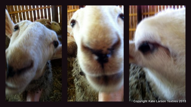 This is what I usually get when I try to take pictures of the lambs.