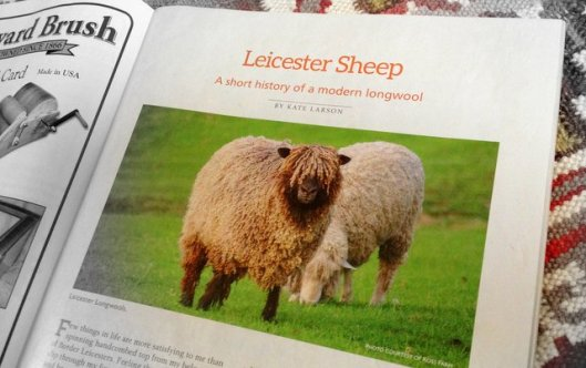 Leicester Sheep article from Spin-Off winter 2015 by Kate Larson.