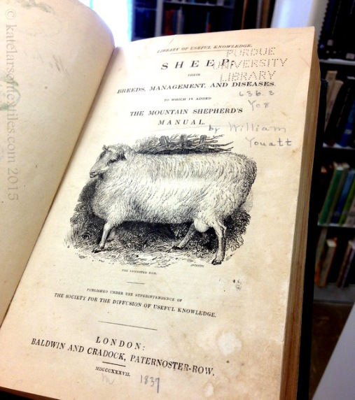So much research. Pictured here: an 1837 edition of Youatt's Sheep.